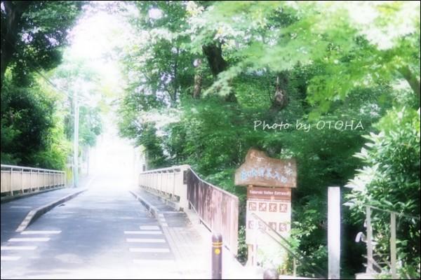 ☆P9240638